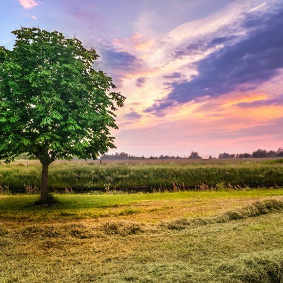 Majowe zioła – babka lancetowata ikasztanowiec zwyczajny