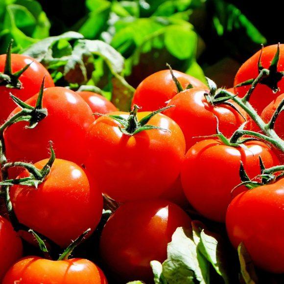Pomidor – wartości odżywcze, zastosowanie, przepisy