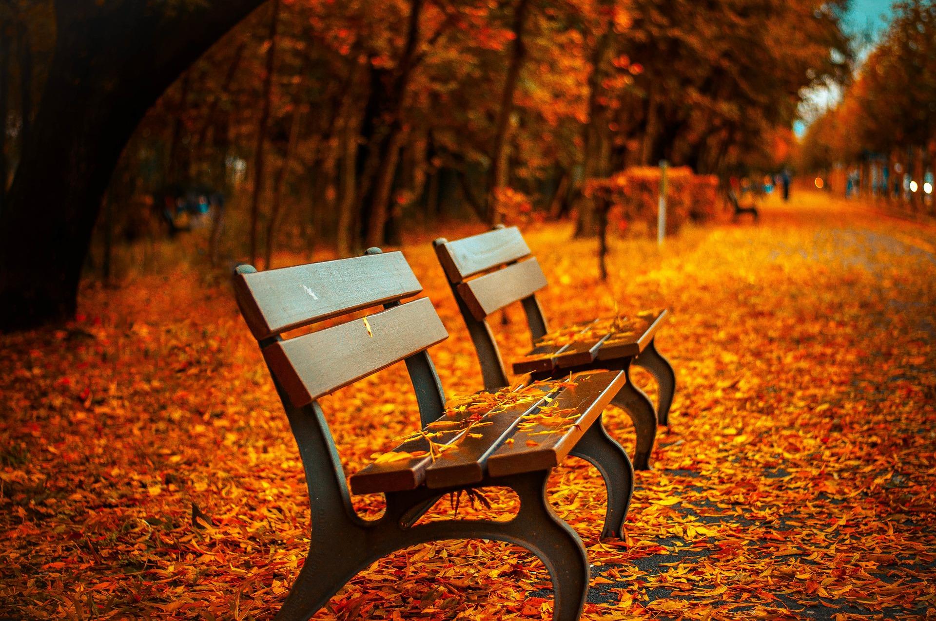 jesień płuca jelito grube jak byc zdrowym